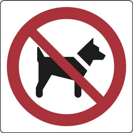 Cartello vietato ingresso ai cani adesivo bianco 12x12 locali pubblici